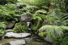 Η πράσινη χλόη στην πέτρα και το νερό Στοκ Εικόνες