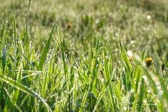 Η πράσινη χλόη με τη δροσιά ρίχνει σε ένα θερινό λιβάδι ένα υπόβαθρο θαμπάδων Στοκ εικόνες με δικαίωμα ελεύθερης χρήσης