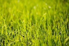 Η πράσινη χλόη φωτίζει με τον ήλιο Στοκ εικόνα με δικαίωμα ελεύθερης χρήσης
