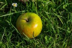 Η πράσινη Apple βρίσκεται στην πράσινη χλόη με ένα ενιαίο λουλούδι μαργαριτών στο υπόβαθρο Στοκ εικόνες με δικαίωμα ελεύθερης χρήσης