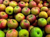Η πράσινη Apple - νωποί καρποί Vegetabels μετά από τη συγκομιδή Στοκ Φωτογραφίες