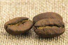 Η προετοιμασία για επιλογές καφέ γίνεται από τα φασόλια καφέ Στοκ εικόνες με δικαίωμα ελεύθερης χρήσης
