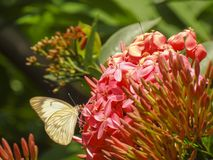 Η προσγείωση πεταλούδων Στοκ Εικόνες