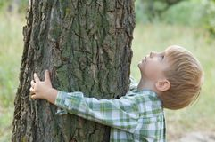 η προσοχή αγοριών αγκαλιάζει λίγο δέντρο φύσης Στοκ Εικόνα