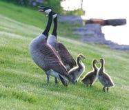 Η προστασία μιας οικογένειας Στοκ Φωτογραφία