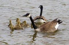 Η προστασία μιας οικογένειας Στοκ φωτογραφία με δικαίωμα ελεύθερης χρήσης