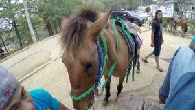 Η προσφορά αλόγων τηρεί το άλογό τους για τη μίσθωση τον αναβάτη απόθεμα βίντεο