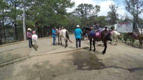 Η προσφορά αλόγων τηρεί το άσπρο άλογό τους για τη μίσθωση τον αναβάτη απόθεμα βίντεο