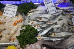Η πρόσφατα πιασμένη θάλασσα αλιεύει και άλλα θαλασσινά στην επίδειξη στην αγορά δήμων Στοκ εικόνα με δικαίωμα ελεύθερης χρήσης