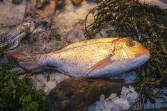 Η πρόσφατα πιασμένη θάλασσα αλιεύει και άλλα θαλασσινά στην επίδειξη στην αγορά δήμων Στοκ Φωτογραφίες