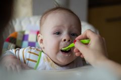Η πρώτη σίτιση του μωρού από το κουτάλι Το μωρό τροφών Mom ομογενοποίησε τα τεμαχισμένα τρόφιμα με ένα κουτάλι Φροντίδα των παιδι στοκ εικόνα με δικαίωμα ελεύθερης χρήσης
