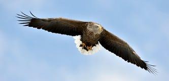 η πτήση αετών παρακολούθησε το λευκό μπλε ουρανός ανασκόπησης Στοκ εικόνες με δικαίωμα ελεύθερης χρήσης