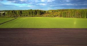 Η πτήση ανωτέρω οι σειρές τομέων και το πράσινο έδαφος στο δάσος φιλμ μικρού μήκους