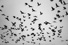 Η πτήση πουλιών Στοκ Εικόνες