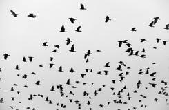 Η πτήση πουλιών Στοκ Φωτογραφίες