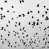 Η πτήση πουλιών Στοκ φωτογραφία με δικαίωμα ελεύθερης χρήσης