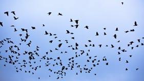 Η πτήση πουλιών Στοκ φωτογραφίες με δικαίωμα ελεύθερης χρήσης