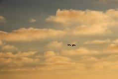 Η πτήση των πουλιών Στοκ φωτογραφίες με δικαίωμα ελεύθερης χρήσης