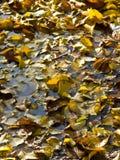 η πτώση αφήνει τη λίμνη Στοκ Φωτογραφία