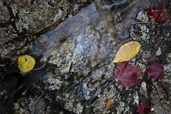 η πτώση αφήνει τη φυσική σύσταση δονούμενη Στοκ Φωτογραφία