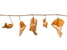 η πτώση βγάζει φύλλα Στοκ Φωτογραφία