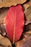 η πτώση βγάζει φύλλα στοκ φωτογραφία με δικαίωμα ελεύθερης χρήσης