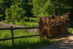 Η πτώση ενός δέντρου σε ένα πάρκο Στοκ Φωτογραφία
