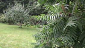 Η πτώση νερού βροχής στους διακοσμητικούς κλάδους δέντρων αυξάνεται στο πάρκο κήπων 4K απόθεμα βίντεο