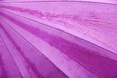 Η πτώση νερού βροχής στο πορφυρό υπόβαθρο ομπρελών με το διάστημα αντιγράφων για προσθέτει το κείμενο Στοκ Φωτογραφία