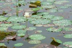 Η πτώση νερού στους αγροίκους βγάζει φύλλα Στοκ Φωτογραφία