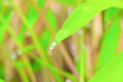 Η πτώση του νερού στο φύλλο στη φύση πρωινού όμορφη με το διάστημα αντιγράφων προσθέτει το κείμενο Στοκ Φωτογραφίες