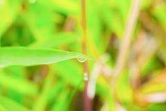 Η πτώση του νερού στο φύλλο στη φύση πρωινού όμορφη με το διάστημα αντιγράφων προσθέτει το κείμενο Στοκ Εικόνα