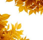 η πτώση φθινοπώρου αφήνει τ&et Στοκ Φωτογραφίες