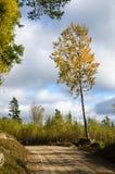 Η πυράκτωση το δέντρο από την άκρη του δρόμου Στοκ φωτογραφίες με δικαίωμα ελεύθερης χρήσης