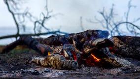 Η πυρκαγιά αναφλέγει και βγαίνει Εγκαύματα φωτιών έξω ενάντια στο σκηνικό της σκιαγραφίας των δέντρων απόθεμα βίντεο