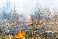Η πυρκαγιά στον τομέα, εγκαύματα ξεραίνει τη χλόη, δέντρα, και καίει ζωντανό στον τομέα Στοκ Φωτογραφία