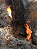Η πυρκαγιά ~ SAN Bernardino Mountains ~ λιμνών μεγάλο αντέχει το καλοκαίρι ~ του προσώπου τιγρών ~ του 2015 Στοκ Εικόνες
