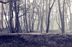 Η πόλη Zelenogradsk χειμερινών πάρκων ερήμων Στοκ Εικόνα