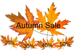Η πώληση φθινοπώρου ονομάζει την έννοια ετικεττών Στοκ εικόνα με δικαίωμα ελεύθερης χρήσης