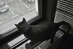 Η δραματική φωτογραφία που λαμβάνεται μιας μαύρης γάτας φαίνεται στο παράθυρο μια δυνατή βροχή που αναγγέλλεται για την πόλη Chom Στοκ Εικόνες