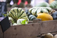 Η ριγωτή πράσινη κολοκύθα σε ένα κιβώτιο για την πώληση στην αγορά δήμων Στοκ Εικόνα