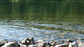 Η ροή του σαφούς νερού στον ποταμό βουνών με τις πέτρες στο πρώτο πλάνο Πλήρες HD φιλμ μικρού μήκους