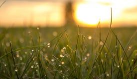 Η δροσιά πρωινού αστράφτει στη χλόη στον ήλιο πρωινού στοκ εικόνα