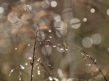 η δροσιά ρίχνει τα φυτά Στοκ Φωτογραφίες