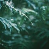 η δροσιά ρίχνει το φύλλο Στοκ Εικόνες