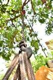 Η ρυμούλκηση αρπάζει το σχοινί γάντζων αλυσίδων φραγμών Στοκ Φωτογραφία