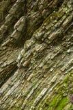 Η ρωγμή του απότομου βράχου στο φαράγγι Στοκ Φωτογραφία