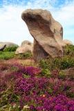 Η ρόδινη ακτή γρανίτη, σε Ploumanach, Βρετάνη, Γαλλία Στοκ Εικόνα