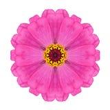 Η ρόδινη Zinnia Elegans Flower Kaleidoscope Isolated στο λευκό Στοκ εικόνα με δικαίωμα ελεύθερης χρήσης