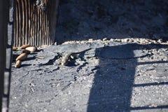 Η σαύρα στο μπροστινό ναυπηγείο, 1 στοκ φωτογραφίες